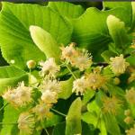 Природные противовоспалительные средства